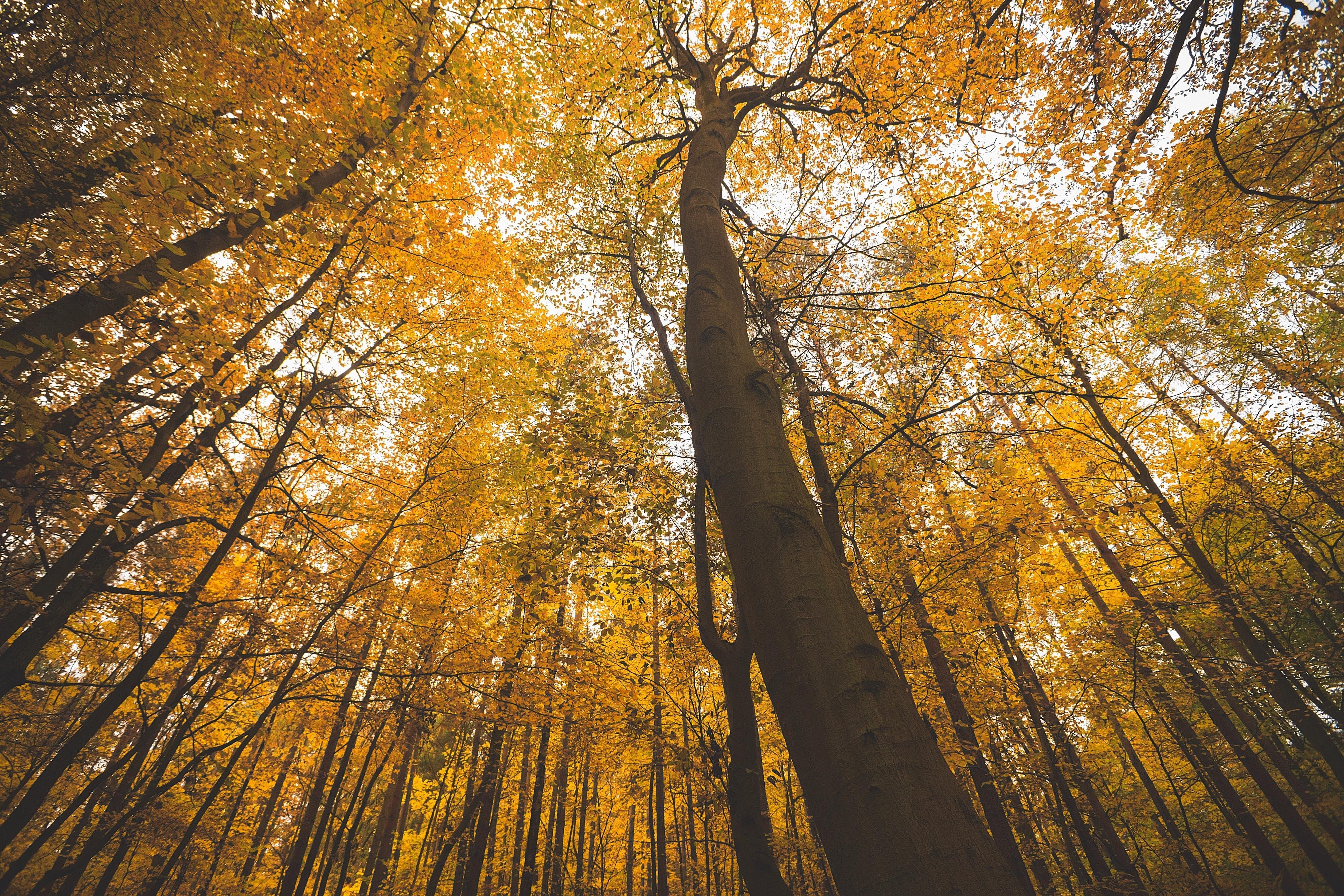 """SCIENCE - Hanging by a thread? Forests and drought ha analizzato la sensibilità del sistema vascolare degli alberi in condizione di siccità critiche: """"il corso estremamente rapido del cambiamento climatico - scrivono gli autori - sembra stia introducendo una enorme instabilità nei tassi di mortalità delle foreste, a livello globale""""."""