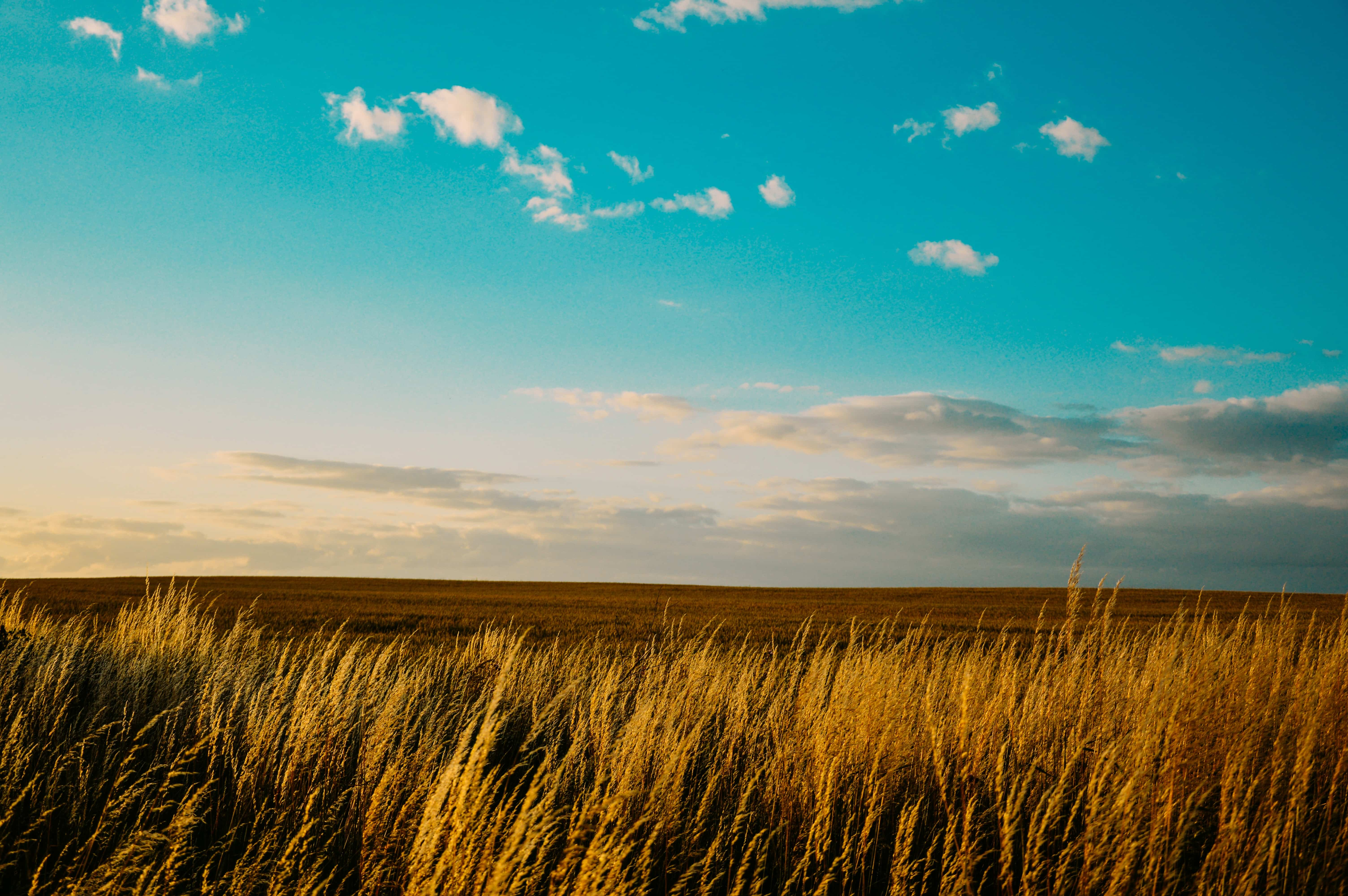 rice-grain-grass-field-7976