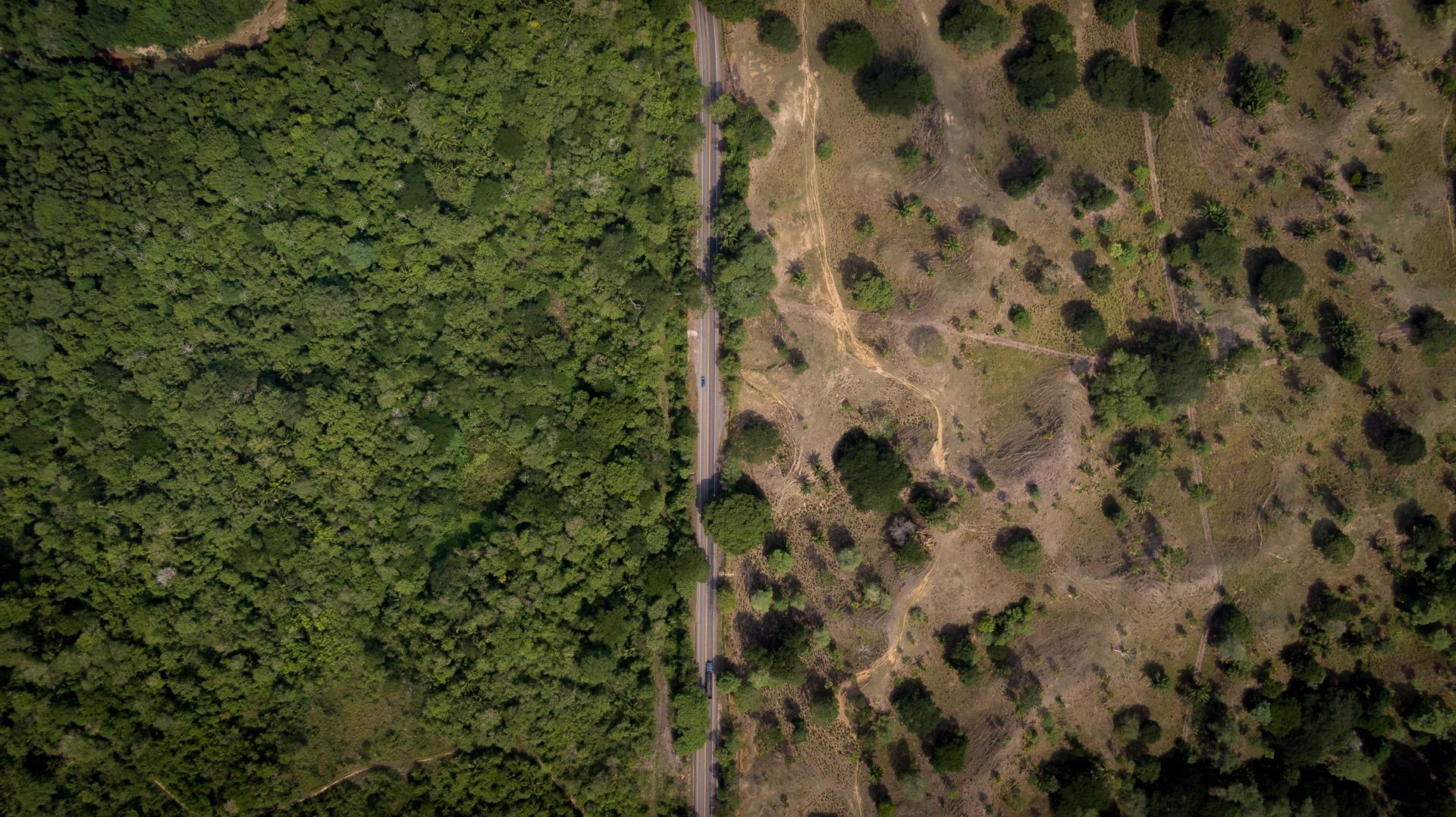 La deforestazione in Colombia è una minaccia di estinzione per specie di uccelli non ancora in Red List